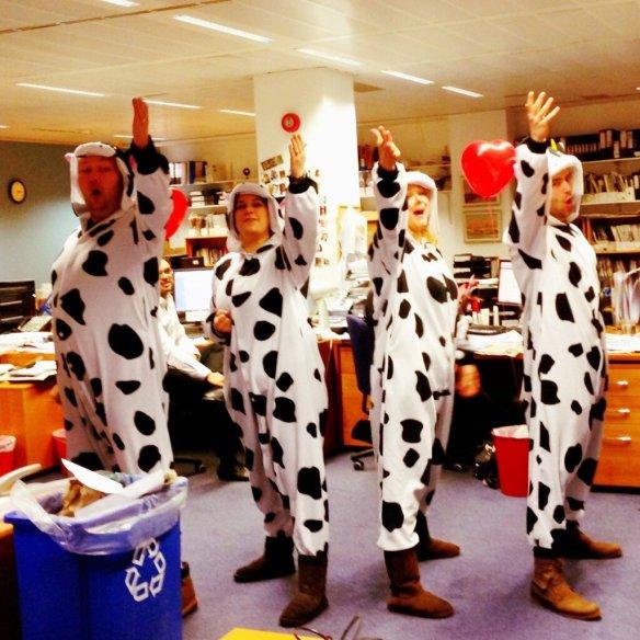 Ben & Jerrys cows